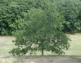 013-albero1