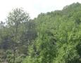 030-nel-bosco